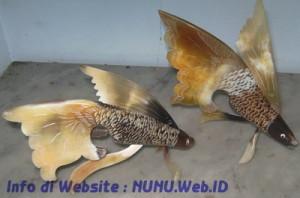 Ikan dari Tanduk